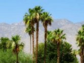 Palm Springs Healthcare and Rehabilitation Center